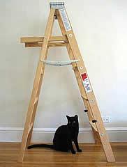 qmph-blog-gato-escalera