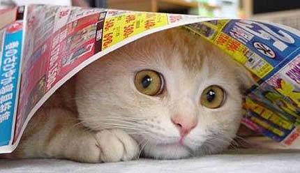 qmph-blog-pseudociencias-animales-gato