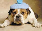 qmph-blog-pseudociencias-animales-perro-fiebre