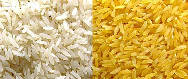 qmph-blog-20D--arroz-dorado